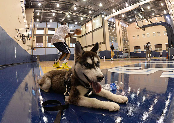 Quincy Pondexter and his pooch (Robert Beck/SI)