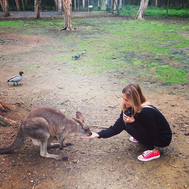 @alanarblanchard :: Such a fun day at the Currumbin Wildlife Sanctuary!