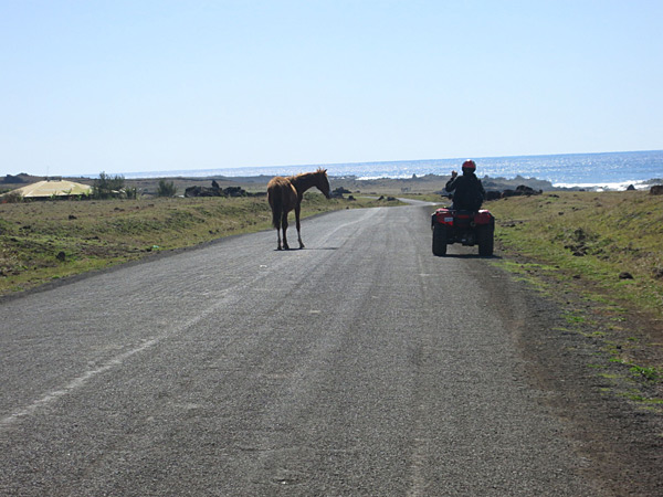 Riding quads in Easter Island while avoiding the local traffic, 2013 issue