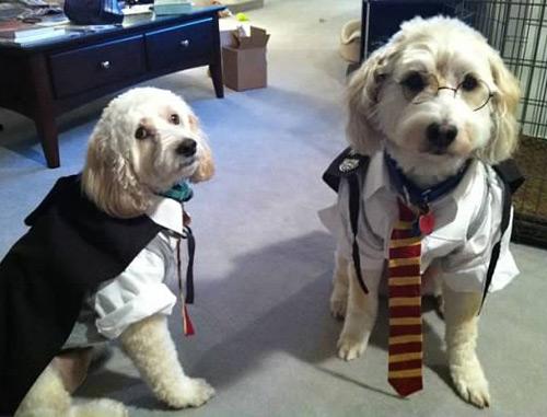 Harry Potter and Albus Dumbledore