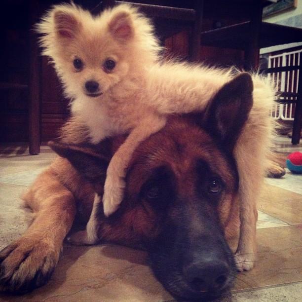 @heidiklum: Puppy LOVE
