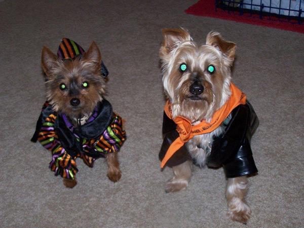 Taffy and Sandy