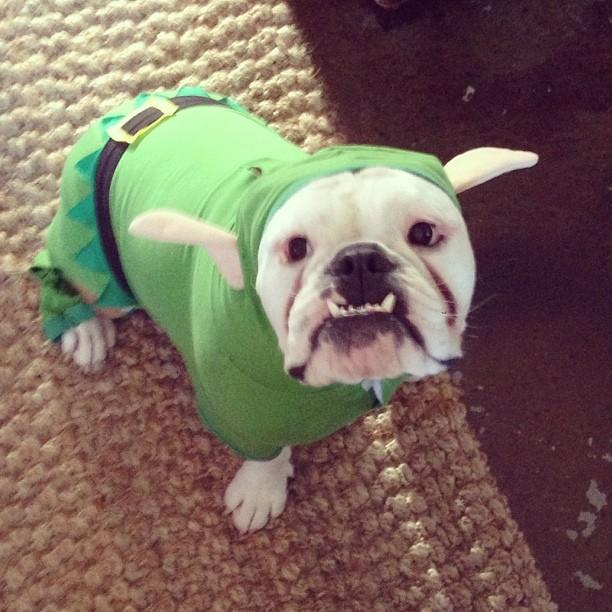 @brooklynddecker: This is my version of elf on a shelf.