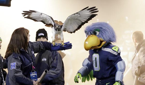 Seahawks mascot and hawk :: AP