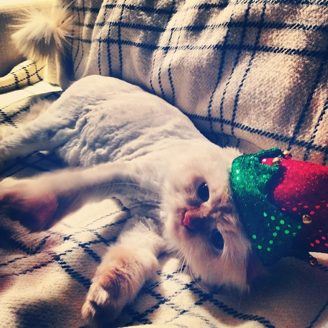 Ready for the holidays!! #christmas #kitty #cat