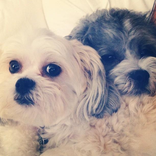 Miss them #puppylove