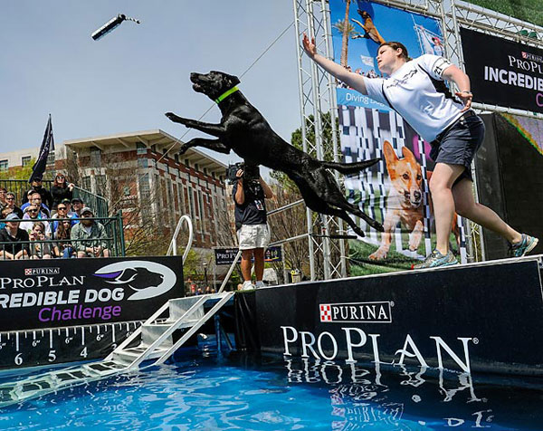 Diving Dog :: AP