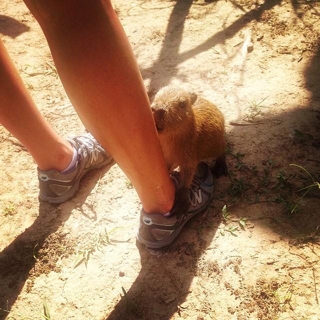 @JessLPerez makes a friend