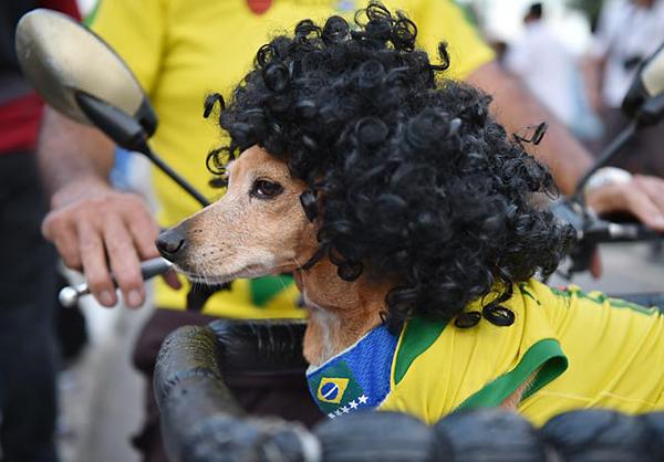A four-legged soccer fan in Rio de Janeiro. (Getty Images)