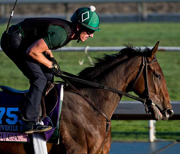 Donegal will send Puca to the starting gate in the Breeders' Cup Juvenile Fillies on Saturday.