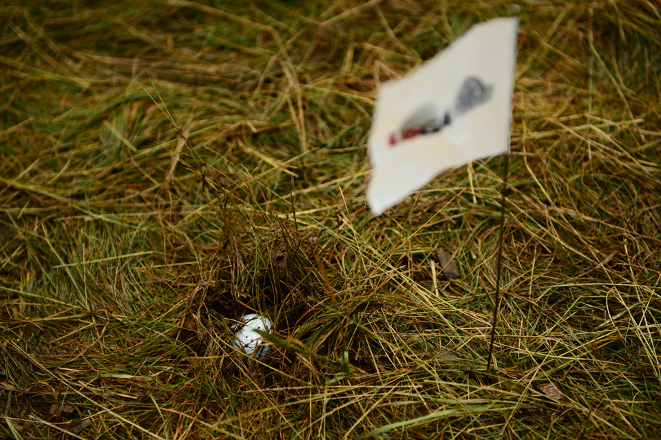 A flag marks the position of a golf ball mired in muddy rough Friday at the U.S. Open.