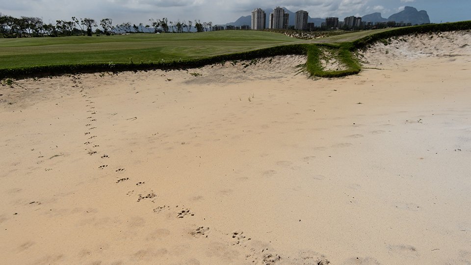 Hoofmarks from a capybara can be seen at the Rio 2016 Olympic Games' golf course.