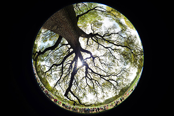 Sports Illustrated photographer Robert Beck roamed Augusta National with a special lens this week. Here's what he saw, starting with a unique view of the iconic oak tree that is the meeting place for many golf insiders during Masters week.