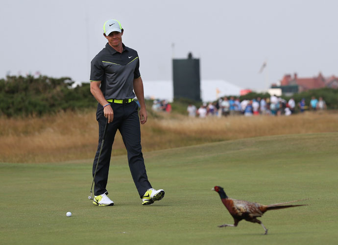 A pheasant on the eighth green was about the only thing that slowed down Rory McIlroy. He made his putt for birdie after the bird left, and shot his second consecutive 66 for a four-shot lead over Dustin Johnson.