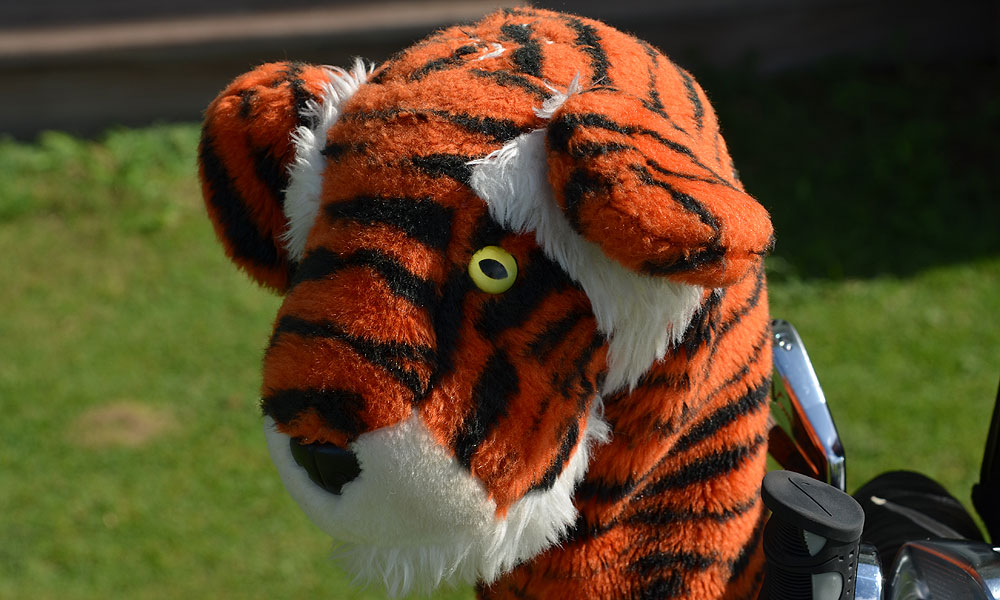 Tiger Woods's headcover and others like it are sure to be the only fur coats on hot and humid Kiawah Island.