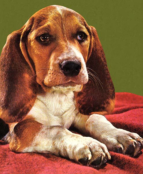 Beagle noun when you hit a par 5 in two or drive a par 4 -- and then three-putt. You've missed your eagle, blown the birdie, feel like you've made a bogey, and end up with a dog of a par.
