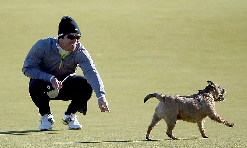 Paul Casey had his golf ball stolen by a dog while lining up a putt on the green.