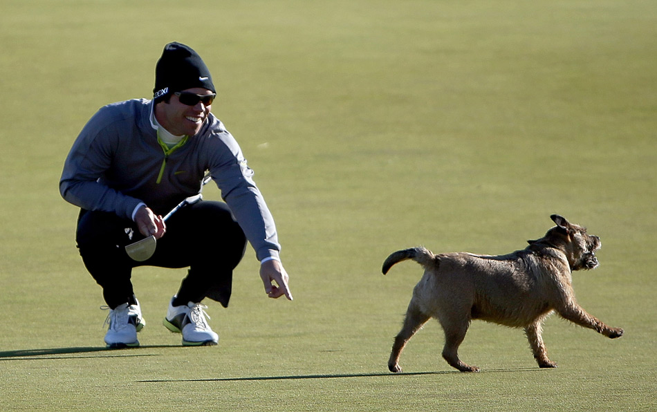 Paul Casey unsuccessfully tried to retrieve his ball after a dog ran on the 12th green and picked it up during the second round of the Alfred Dunhill Links Championship at Kingsbarns Golf Links.