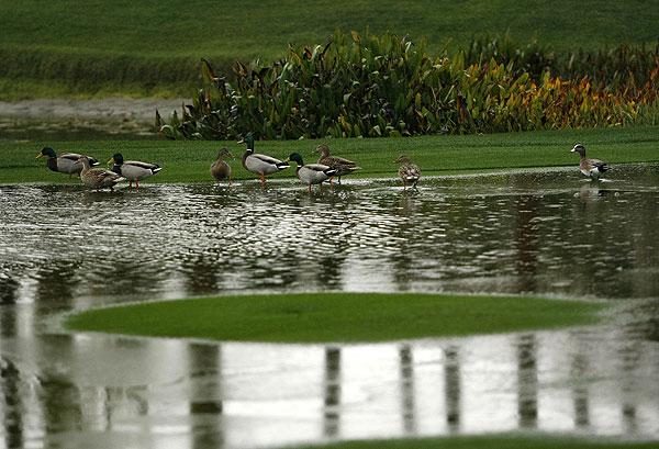 Only a flock of ducks was found walking the course at the Bob Hope Classic Thursday. The tournament was postponed due to heavy rains.