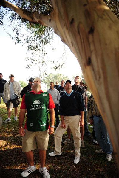 During the Farmers Insurance Open, Ryan Palmer lost his ball in a tree.