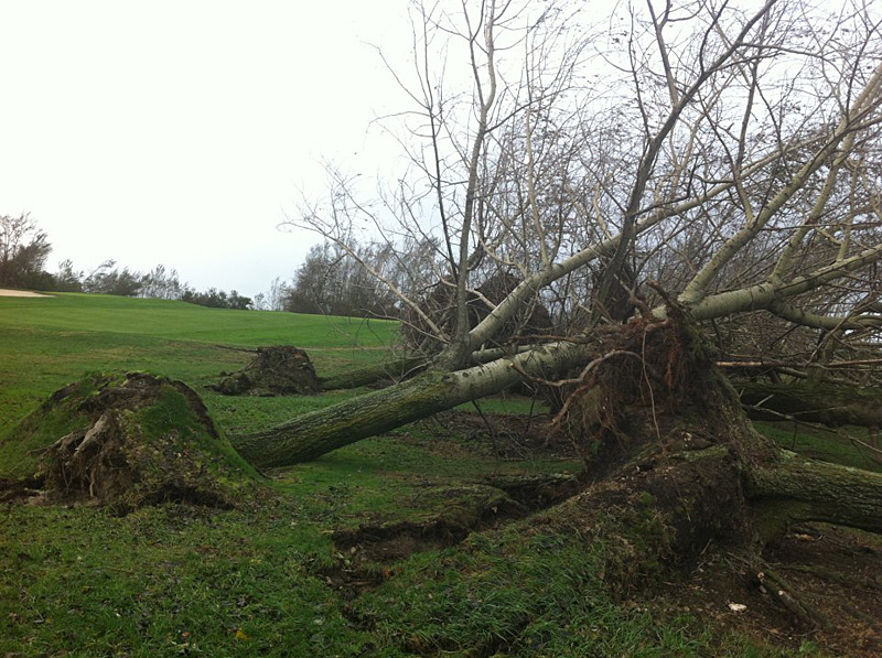 "Here's a look at some of the golf courses that were affected by Hurricane Sandy. Have a picture of your local course? Send it to editor@golf.com.                                           Marine Park Golf Course in Brooklyn, N.Y., posted several pictures on its Facebook page: ""These are a couple of the trees that stood between the 11th and 12th fairways."""