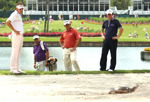 Ian Poulter, Lee Westwood and McIlroy waited for a turtle to play through on the 16th hole.