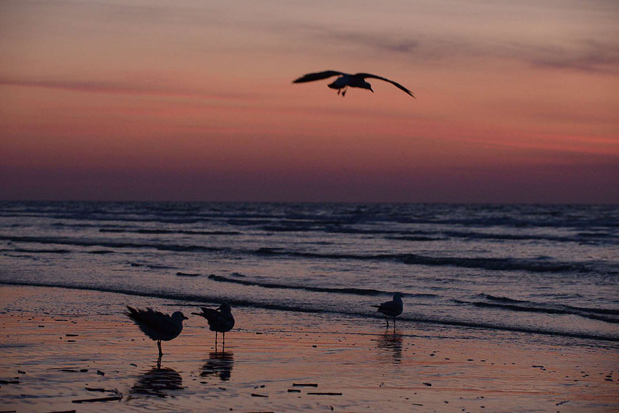 The moments before sunrise on the beaches of Hilton Head Island are the most beautiful and photographic, as the sky turns crimson just before the sun pops out, and the gulls and other birds flock to the shoreline in search of breakfast. Hilton Head has more than 12 miles of beautiful beaches.