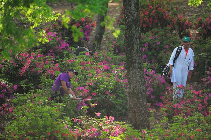Lost in the azaleas: Phil Mickelson hits out of the woods on 13th hole at the 2011 Masters.