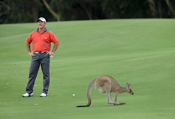 Peter Lonard had to wait while a kangaroo hopped across the fairway at the 2008 Australian PGA Championship.