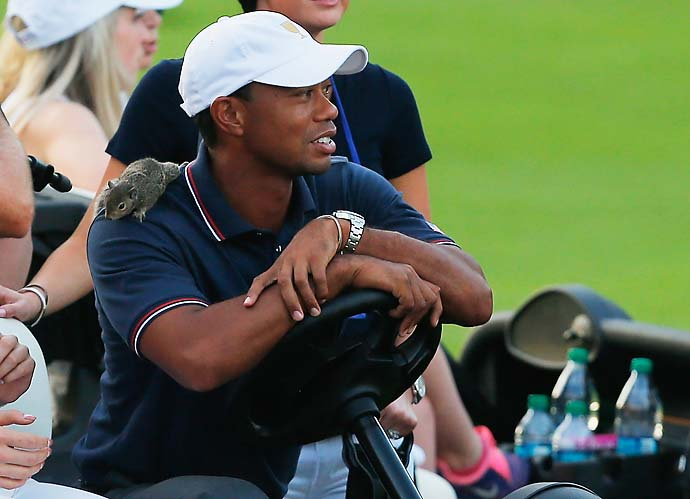 """I carry a rabbit's foot around,"" he said. ""I don't know about a live squirrel.""                     --Presidents Cup Captain Fred Couples on the U.S. team mascot Sammy the Squirrel, here with Tiger Woods."