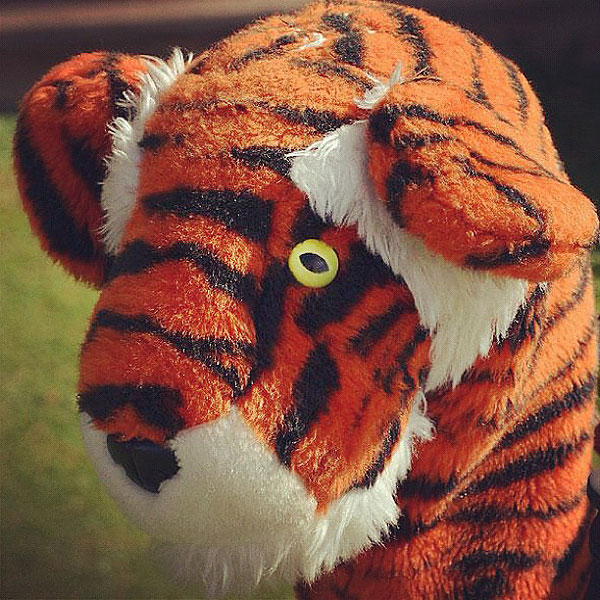 Tiger's famous head cover.