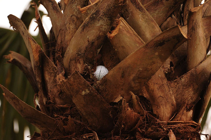 Woods' drive got stuck in a tree on 17. Woods identified his ball, took an unplayable lie and made bogey.