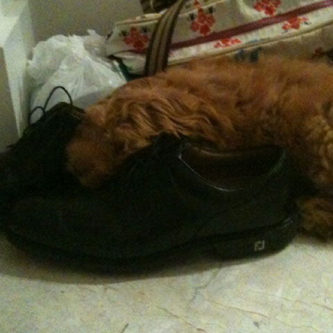 The Poulter family welcomed a new dog to their family this week.                        Golf spikes: Not just for golfers.                                                                      Ianjamespoulter I knew my Footjoys icons were comfortable but this is taking it to a new level, are you happy bentley!!!!!! (Jan. 12)