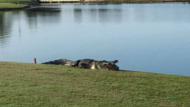 This is what you don't want to see on a golf course.