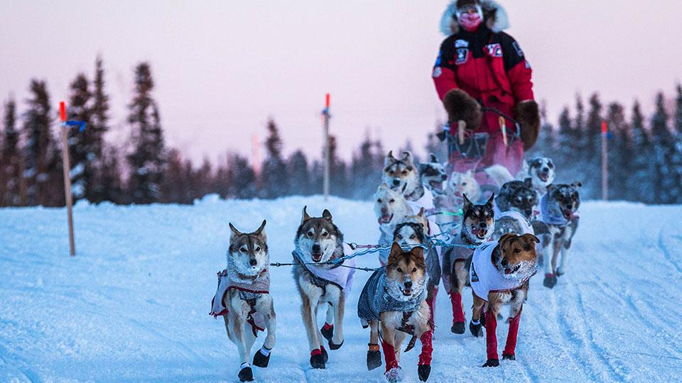 Aliy Zirkle and her team arrive at the Huslia, Alaska, checkpoint for the 2015 Iditarod Trail Sled Dog Race.