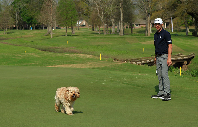 Matt Fast looks on as a dog crossing the third green interrupts his routine during the second round of the Chitimacha Louisiana Open presented by NACHER held at Le Triomphe Golf and Country Club