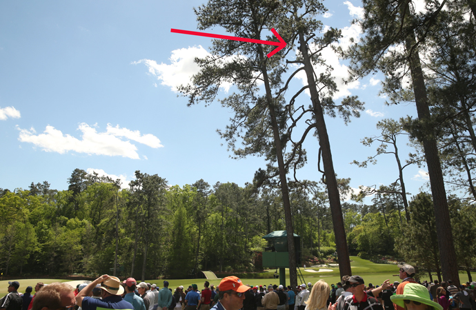 An arrow points to where cameras sit high above in a tree just to the west of the 12th tee at Augusta National Golf Club.