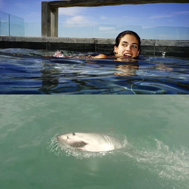 """Spot de differences """"shark sees shark does"""""""