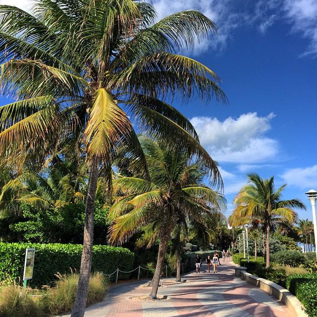 Miami's palm tree game is no joke