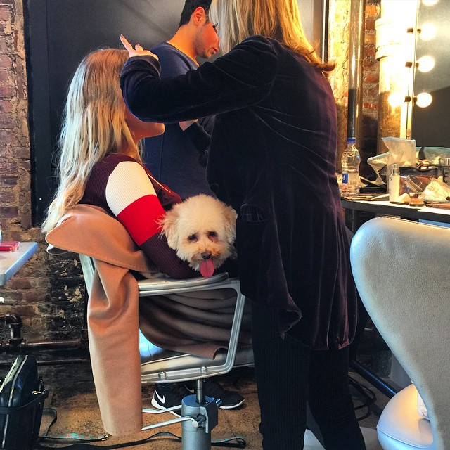 Chester ( and Maple) Came to Work Today ! Chesters practicing his #MileyCyrus Pose! #chesterbrinkley #maplesugarbrinkley #photoshoot #models #nyc @sailorbrinkleycook @sandylinter
