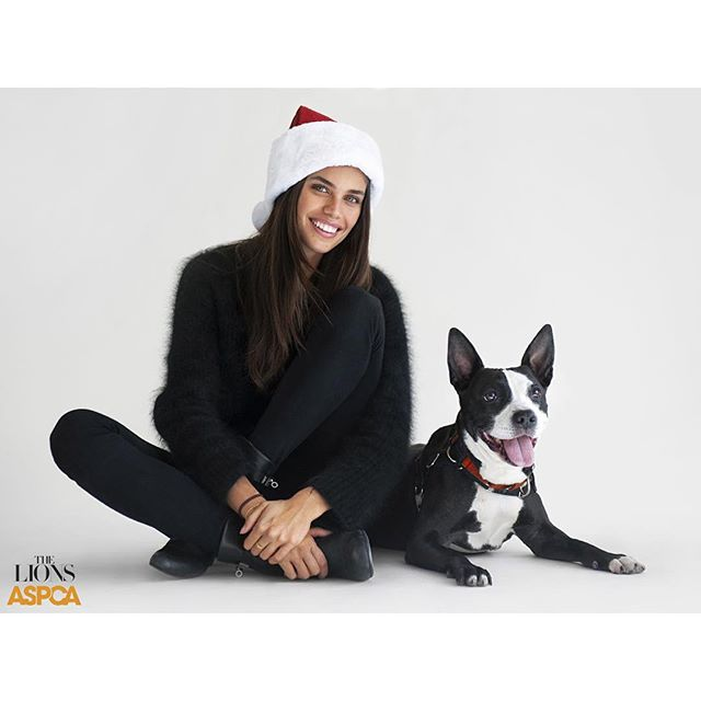 "@thelionsny is teaming up with the @ASPCA for a very special holiday project feetsantaskin-tone-3 Meet Tahini This friendly dog is a total sweetheart who loves to meet new dogs and people alike. Tahini is happiest when she is sitting in your lap or right by your side. Going for walks and meeting new people is also one of her favorite activities! This good-natured pup loves to make new friends, with both people and dogs. Tahini walks very well on her leash, sticking right by your side when you're out for a stroll. She is interested in making some new dog friends who can play gently. At times, this friendly girl can be a bit talkative, but our Behavior Team can show you some exercises to help Tahini learn to use her inside voice. This smart girl already knows how to ""sit"". If you are interested in Tahini, please visit the link in our bio to find out more information on adoption or to locate your nearest animal shelter. #SaraSampaio #ASPCA #LionsToTheRescue #Models4Mutts #AdoptDontShop #Rescue #Holidays2015 #TheLionsNY"