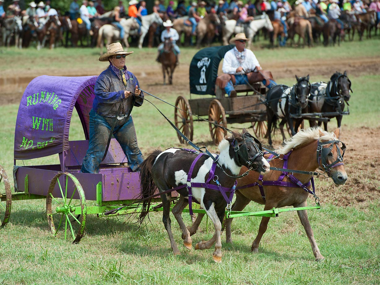 "In the Oklahoma Land Rush division, wagons must weigh at least 300 lbs and the ponies can be no more than 92"" in total height."