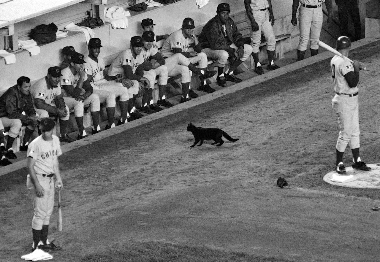 While the Cubs were batting at Shea, a black cat walked behind the on-deck circle where Chicago third baseman Ron Santo was standing, and stayed even through the crowd yelling. The cat proved to be a bad omen for the Cubs, whose half-game lead over the Mets evaporated quickly. Chicago went 8-17 in September, giving the Mets the division title.