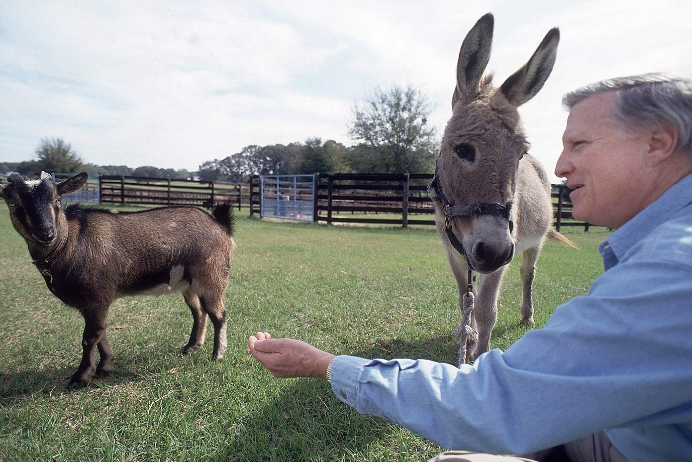 George Steinbrenner looks to feed his farm animals on Feb. 15, 1993 at his home in Tampa, Fla.