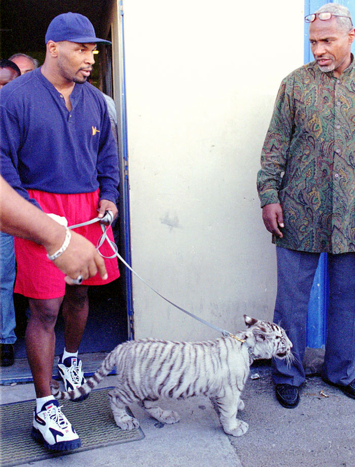 Mike Tyson leaves the Golden Gloves Gym with his pet tiger ''Kenya'' after a workout session in Las Vegas.