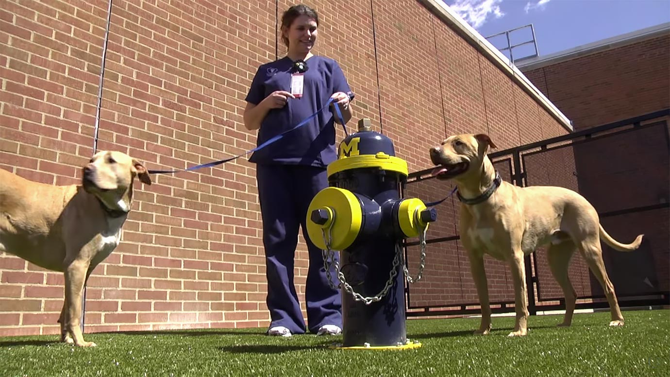 Upgrades at the Ohio State College of Veterinary Medicine include a dog-walking area with a new fire hydrant.