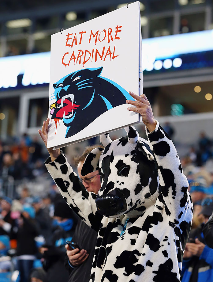This Chick-fil-A cow is clearly a Carolina Panthers fan during the NFC Championship Game against the Arizona Cardinals at Bank of America Stadium in Charlotte, N.C.