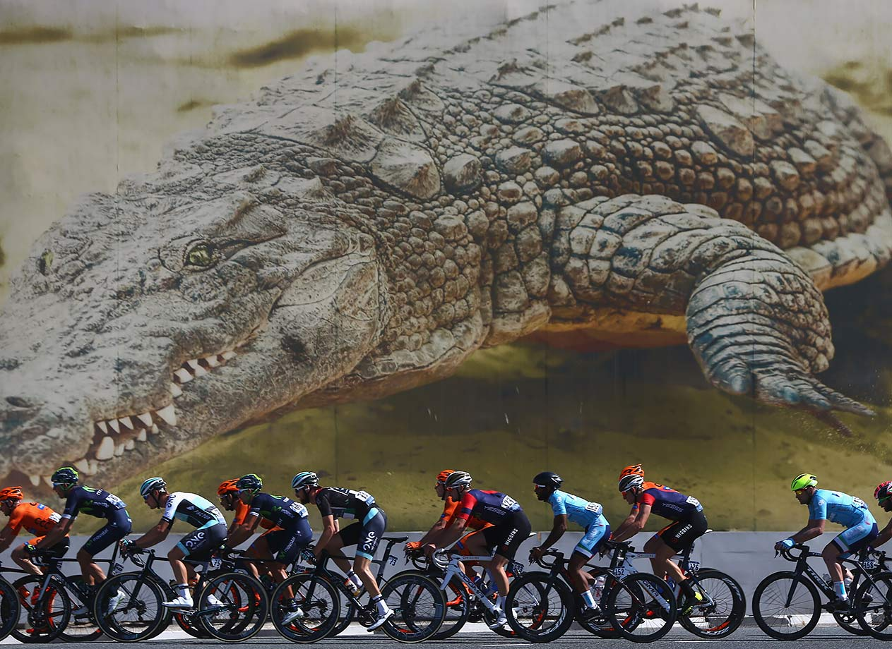 The peloton pass by the Dubai Crocodile Park during the Business Bay Stage Four of the Tour of Dubai, United Arab Emirates.