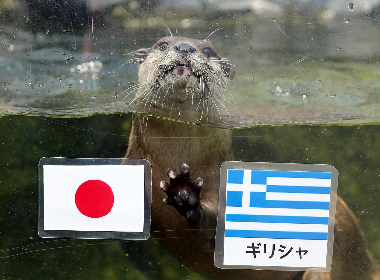 An otter named Chippu, 6, predicted Japan would beat Greece in World Cup action. And that's why you should never listen to otters when it comes time to lay your hard-earned money down in a bet.