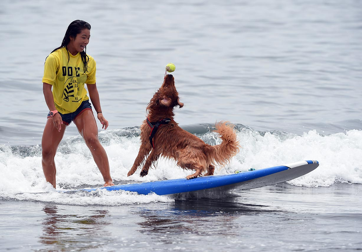 Bell and his owner Nao Omura had a ball at the Mabo Royal Kj Cup surfing contest at Tsujido beach in Fujisawa, Kanagawa prefecture.